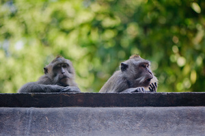 Monkeys proliferate at the base of a mountain-top temple in Lombok, Indonesia.