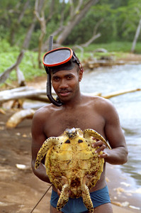 Although turtle hunting is illegal throughout Vanuatu, people in the Banks group of islands still hunt them. This young man caught an adolescent hawksbill. He and his mates quickly gutted the animal and cooked the meat in coconut milk using the shell as a saucepan.