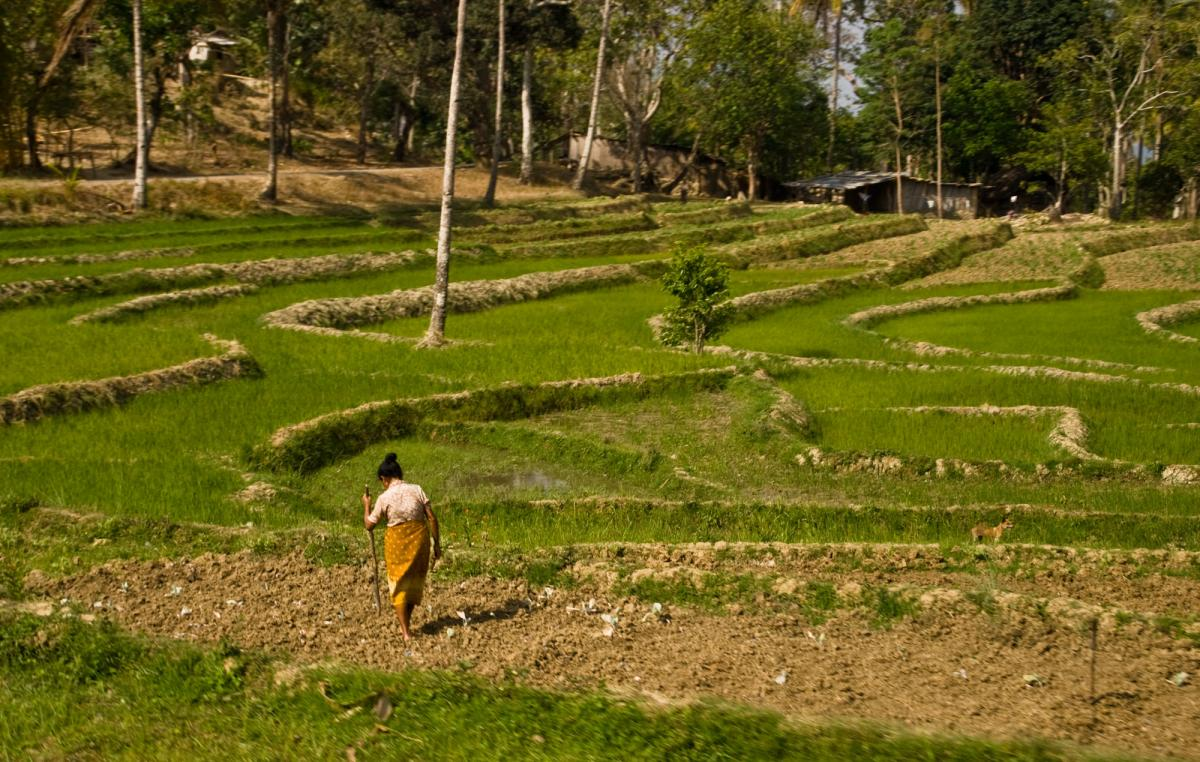 timor-woman-planting-rice-1.jpg