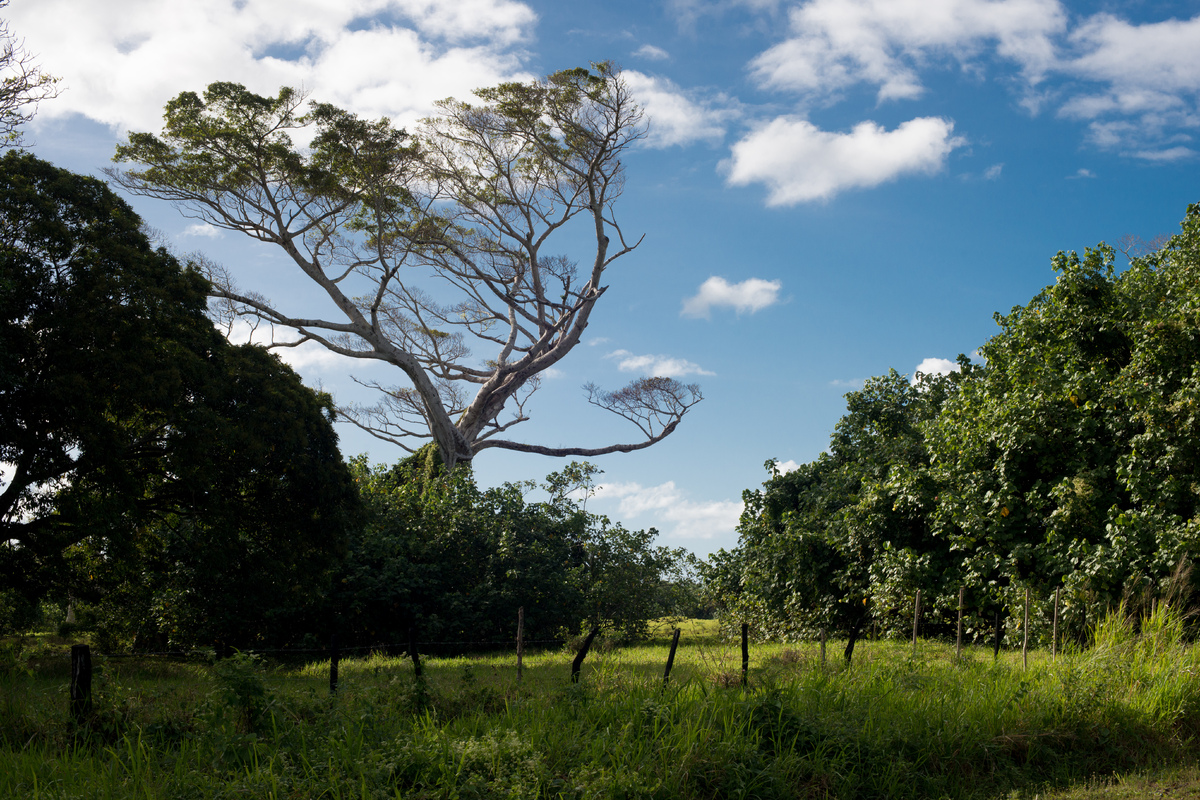 vila-around-the-island-with-jj-1.jpg