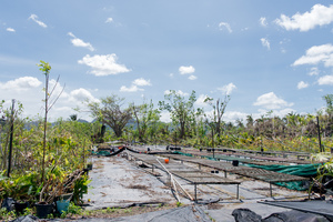 The partially destroyed roof of a resting area in a botanical garden near Port Vila.