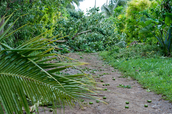 Cyclone Vania did most of its damage in sourthern Vanuatu, but it did manage a glancing blow on Port Vila.