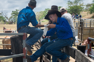 Getting ready for the real work to begin - a bronc rider tapes up.