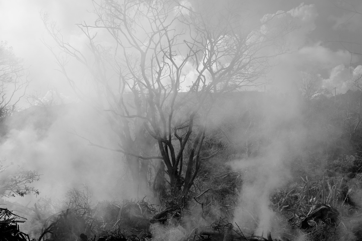 vila-smoke-in-the-trees-1.jpg