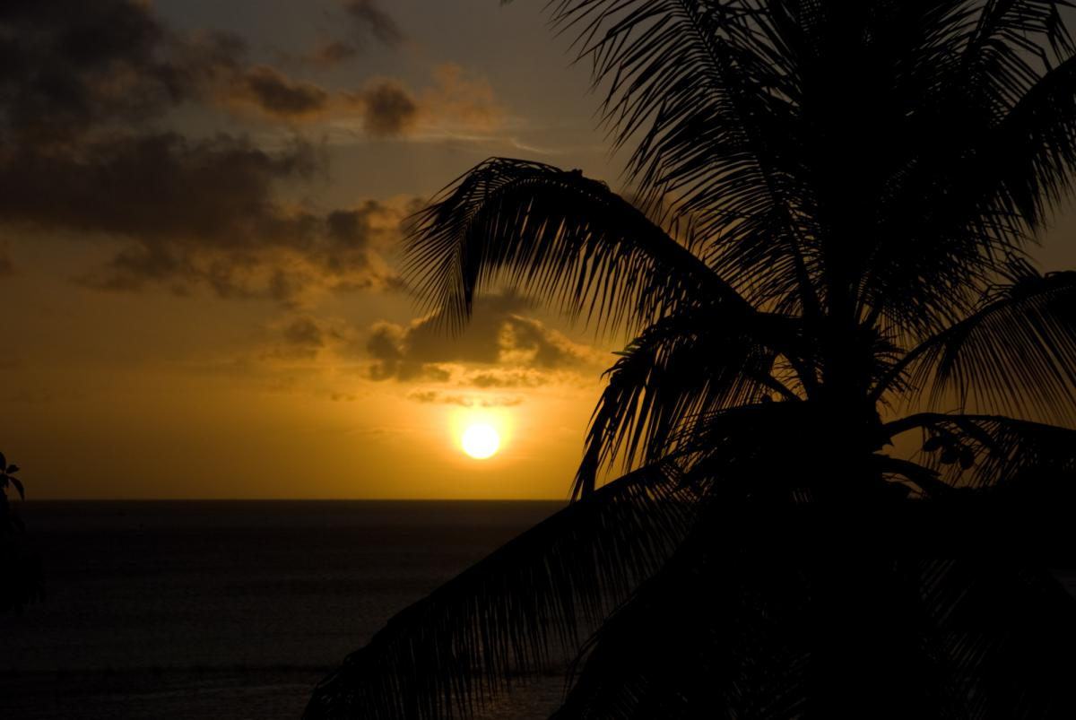 vila-sunset-and-coconuts-1.jpg