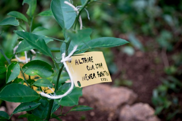 Shots from a memorial tree planting ceremony.